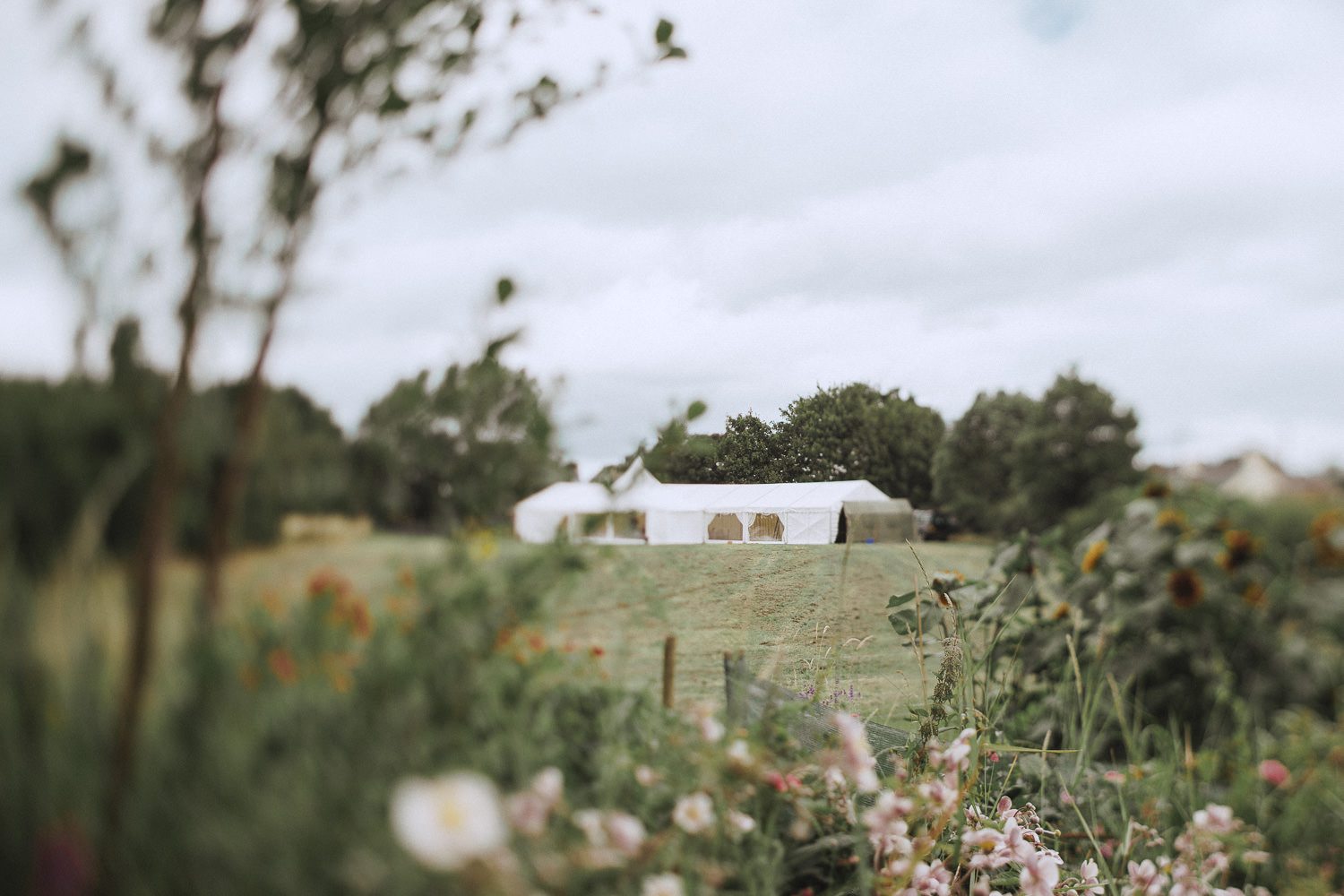 A flower garden with a marquee in the back